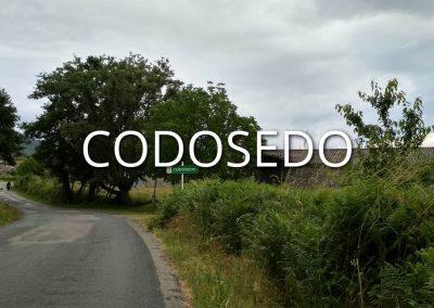 codosedo